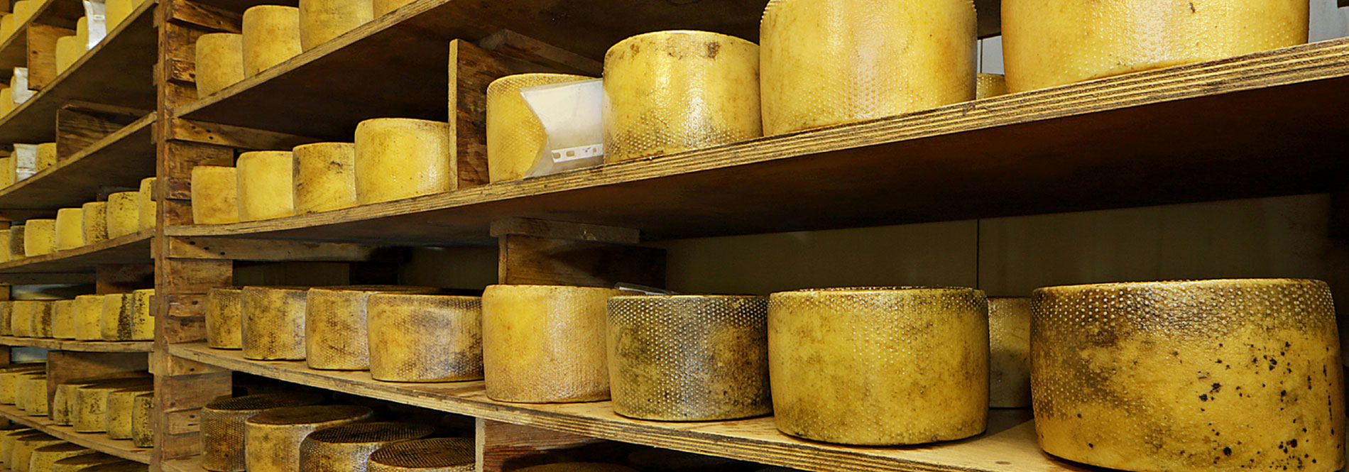 La Quercia italian cheese factory Guidonia-Rome